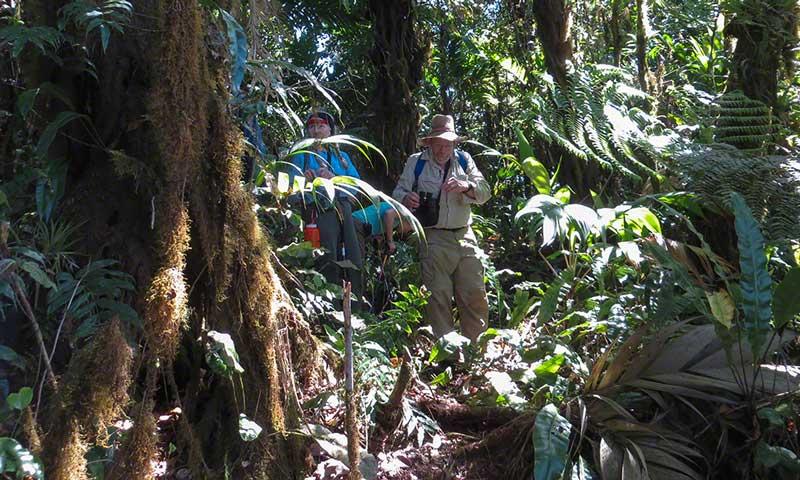 Tanager Ecotours • Cerro Hoya summit hike