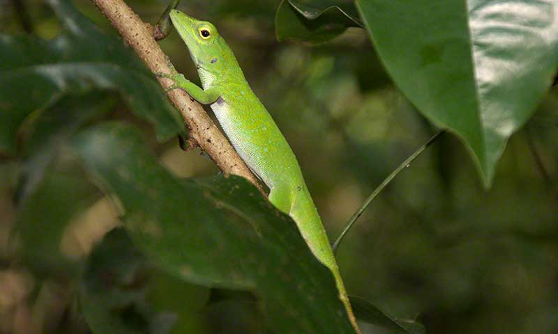 Tanager Ecotours • Cerro Hoya National Park