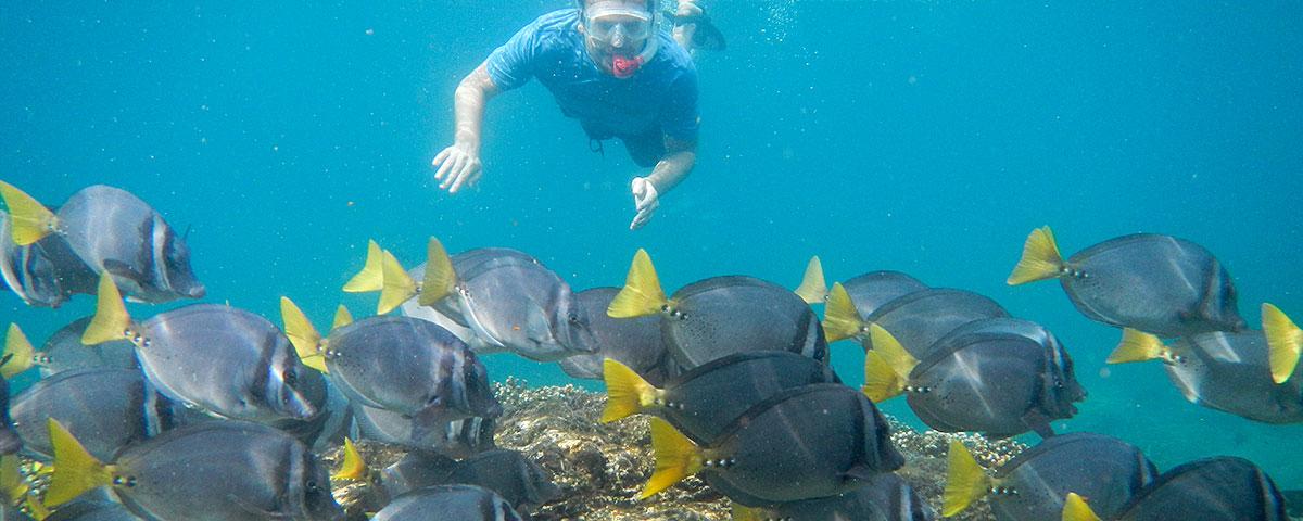 Tanager Ecotours, Surgeon Fish